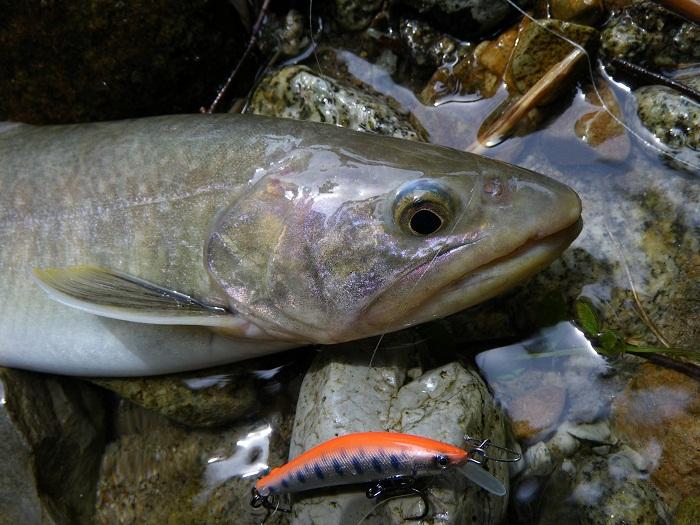 Loại hình câu cá yêu thích của tôi ở Nhật- phần 3